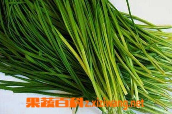 果蔬百科乙肝可以吃韭菜吗